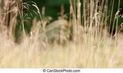 Summer grass, closeup shot.
