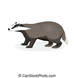 Badger on short legs in realistic style isolated on white...