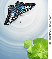 butterfly flying through a lake with green plants floating