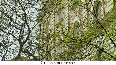 spring green trees near the wall of building