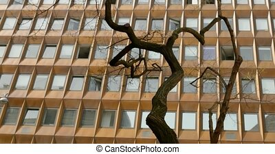 Curved tree on the background of a building with many...
