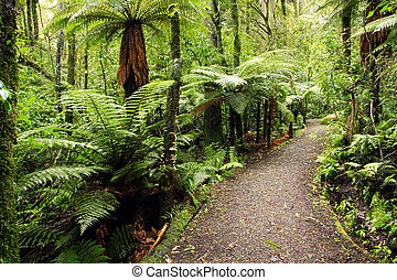 Tropical forest - Walking trail in New Zealand tropical...