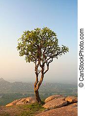 Small tree in hampi india at morning