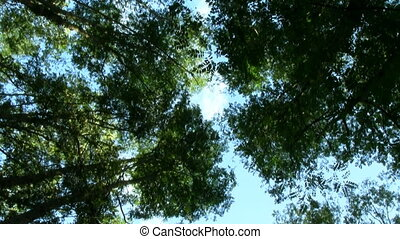 Trees in the forest ground view