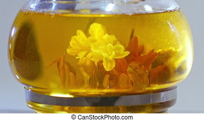 Green Chinese tea flower bud blooming in glass teapot.