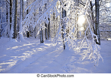 Wintry landscape and sunlight