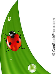 Ladybird On Grass - Ladybird On Green Grass, Isolated On...