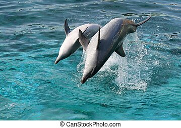 Dolphin backflip jump - Bottlenose dolphin leaping out of...