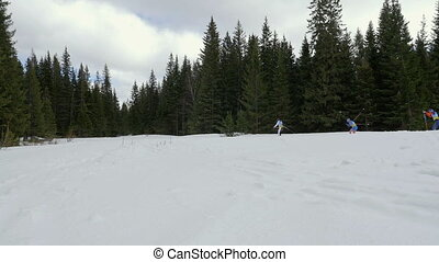 three skiers athletes ski marathon trail of pine forest