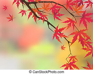 Japanese maple in autumn colors.