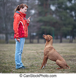 Master and her obedient rhodesian ridgeback dog