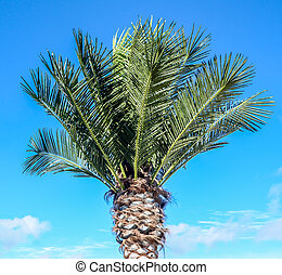 Green palm tree on the blue sky
