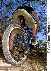 Riding a mountain bike through the bush fast. - A stock...