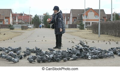 Woman feeding flock of pigeons and sparrows