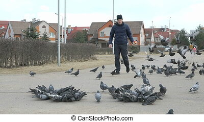 Man feeding flock of pigeons and sparrows - Man aged 40s...
