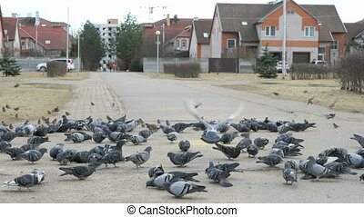 Woman passing along of flocks of pigeons in urban park in...