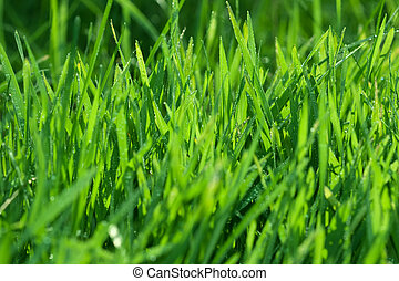Water in green grass
