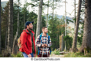 Hikers looking at view in the forest