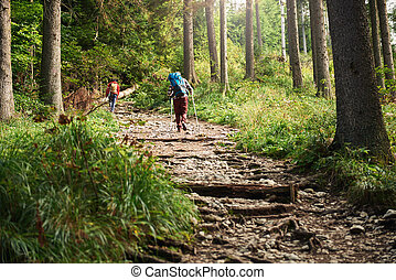 Two hikers walking along a forest trail - Rearview of two...