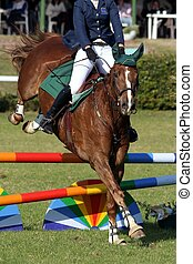 Show Jumping Horse and Rider - Beautiful brown horse jumping...