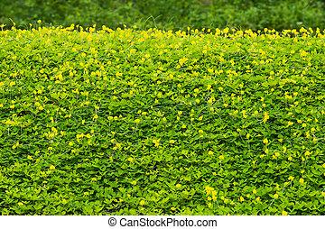 yellow weed - Beauty yellow weed