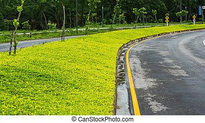 yellow weed - Beauty yellow weed roadside