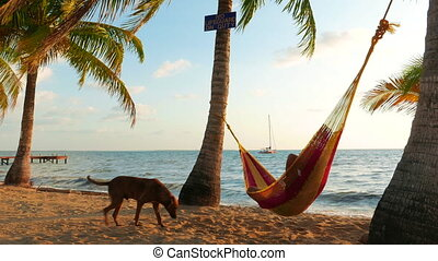 Man With a Dog in a Hammock - Adult caucasian man relaxing...