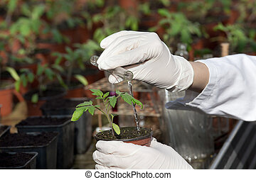 Scientist with test tube and seedling - Close up of...