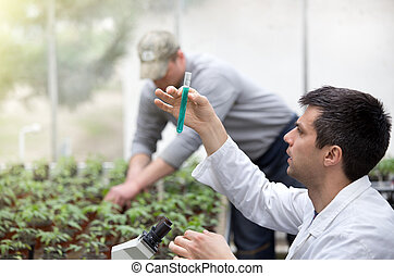 Scientist with test tube microscope and seedlings -...