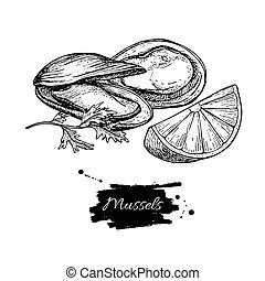 Mussel hand drawn vector illustration. Engraved style...