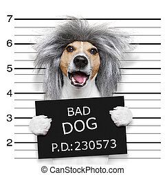 nerd silly dog mugshot - nerd crazy jack russell dog at the...