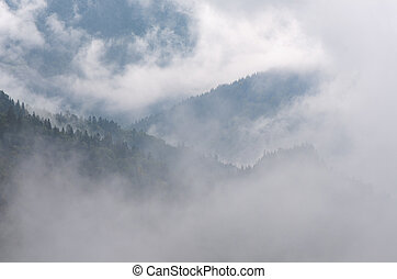 Autumn landscape with fog in a mountain forest - Autumn...