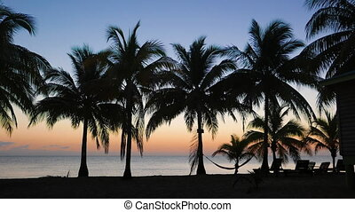 Sun Rising Over the Caribbean Sea - Palms slowly swinging in...