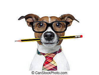 dog with pencil at the office - jack russell dog with pencil...