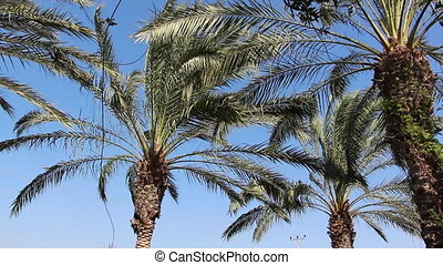 palm trees - Shot of palm trees