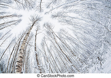 Winter forest. Snowy wood captured with Fish-Eye lens....