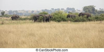 Herd of elephants in Queen Elizabeth National Park, Uganda