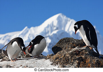 Three penguins are sitting on a rock, mountains in the...