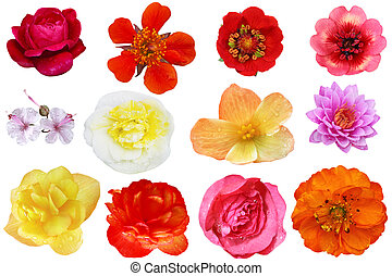 Flower Head Colleage - Flower heads colleage isolated on...