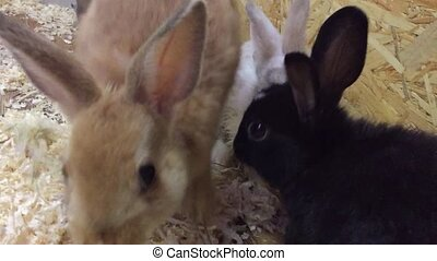 rabbit. Small rabbits eat from the trough - rabbit. Small...