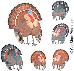 collection wild turkeys for your design