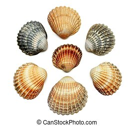 Bunch of exotic seashells, isolated on white