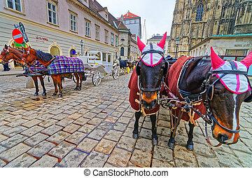 Team of horses and their coach near Stephansplatz Vienna