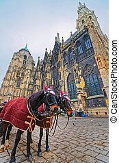Team of horses and their coach in Stephansplatz in Vienna