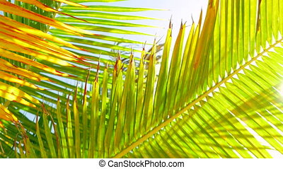 Palm Leafs Swinging in the Wind - Detailed green and orange...