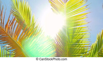 Sun Shinning into the Camera Through Palm Leafs - Detailed...