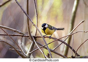 little bird sitting on a branch - Image of a little bird...