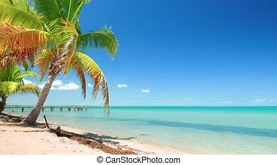 Perfect Caribbean Blue Sea and a Palm Tree - Vibrant...