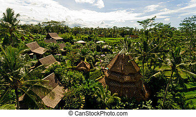 Bungalows in the jungle.