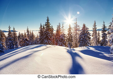 Fantastic wintry landscape - Majestic winter landscape...